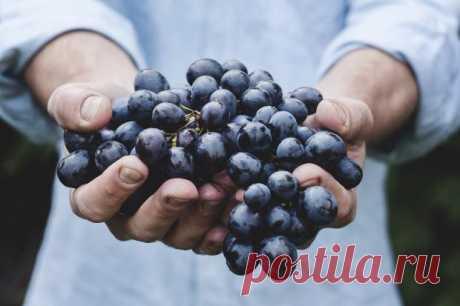 Чем полезны для здоровья плоды синего и черного цвета и как разнообразить ими свой рацион