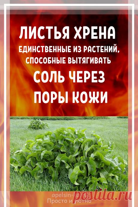 Листья хрена – единственные из растений, способные вытягивать соль через поры кожи - медиаплатформа МирТесен