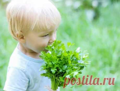 Какую зелень можно давать ребенку? / Малютка