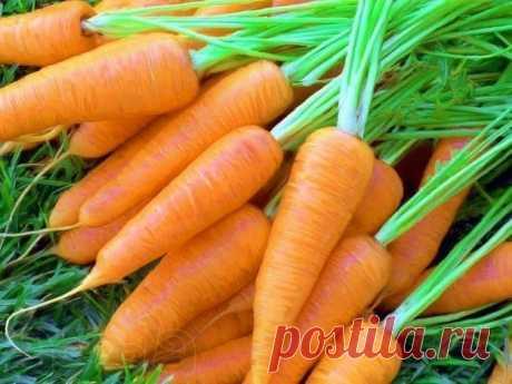 Эффективный способ посева моркови