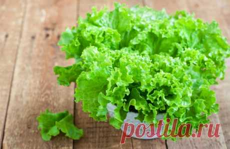 Выращивание листового салата, витаминной полезной зелени, которая должна быть в каждом доме: Листовой салат: правила выращивания салата - Частные Заметки