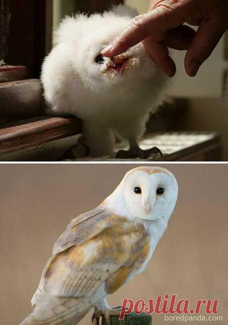 Какими были красивые птицы в детстве. Часть 1