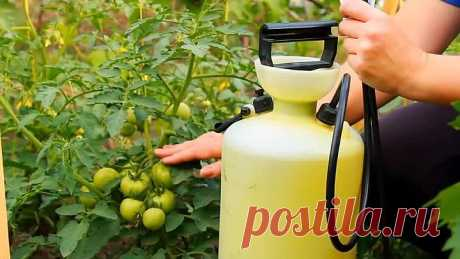 Простая и эффективная подкормка овощей!