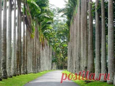 Королевский Ботанический Сад, Шри-Ланка — Путешествия