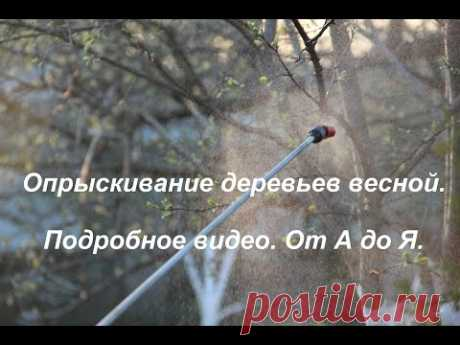Spraying of trees in the spring. Detailed video. From And to I.