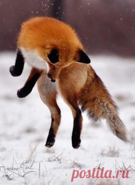 Прыжок !