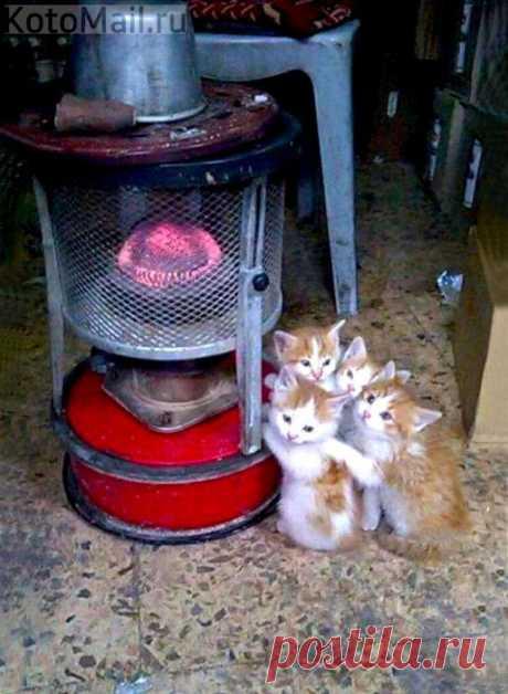 Включили отопление