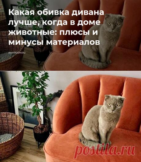 Какая обивка дивана лучше, когда в доме животные: плюсы и минусы материалов