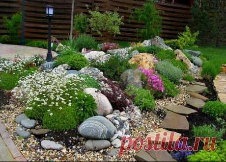 Садовые цветы: Альпийская горка