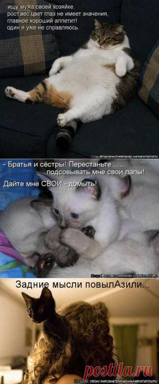 ЗАРЯЖАЕМСЯ ПОЗИТИВОМ... | Kote.Rjaka.com