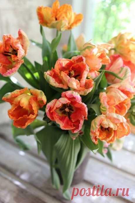 В сердце каждого из нас живёт весна – только дайте распуститься этим прекрасным и чистым цветам нежности, веры и любви…