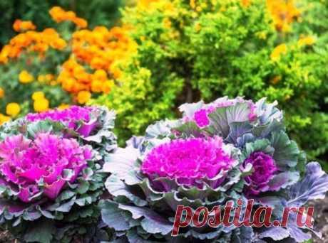 Декоративная капуста в горшках - отличный способ внести изюминку в свой сад!