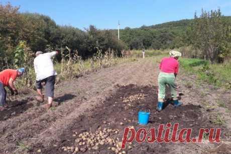 В Госдуме рассказали, грозит ли дачникам налог на огород