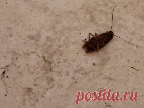 Как быстро и навсегда избавиться от тараканов в доме | GERMANIA.ONE