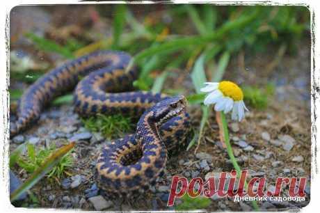 Как избавиться от змей на даче за два дня - безопасные и эффективные методы | Дневник садовода | Яндекс Дзен