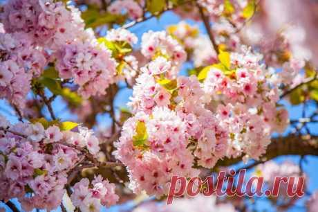 5 деревьев, которые высаживают весной | О Фазенде. Загородная жизнь | Яндекс Дзен