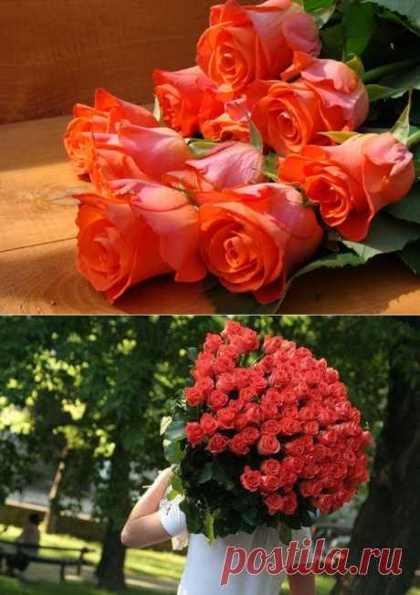 8 способов сохранить розы в вазе.