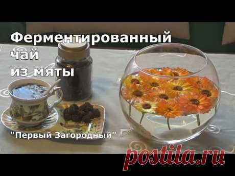 The fermented tea from mint in house conditions - YouTube