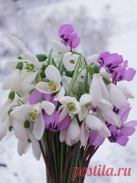 ...Что вам сегодня принести?..     - Принесите хорошие новости,    И букетик Весны для настроения!..