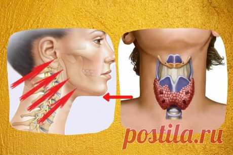 Подтяжка лица через воздействие на щитовидную железу | Леди-Молодость. Инна Нефедовская | Яндекс Дзен