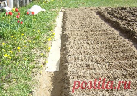 Убираем на хранение наше нехитрое приспособление для уменьшения количества сорняков на огороде | Белорусские сотки | Яндекс Дзен