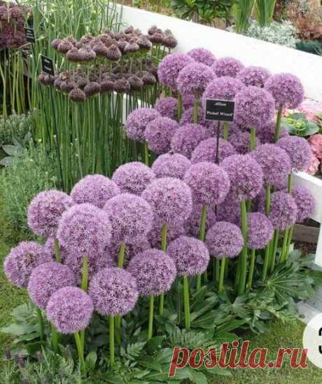 Красиво посадить луковичные при помощи яичных лотков