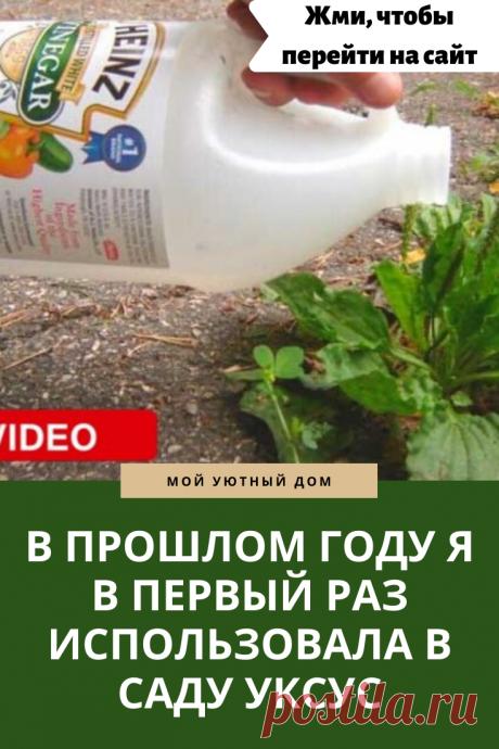 Идеи как использовать уксус в огороде