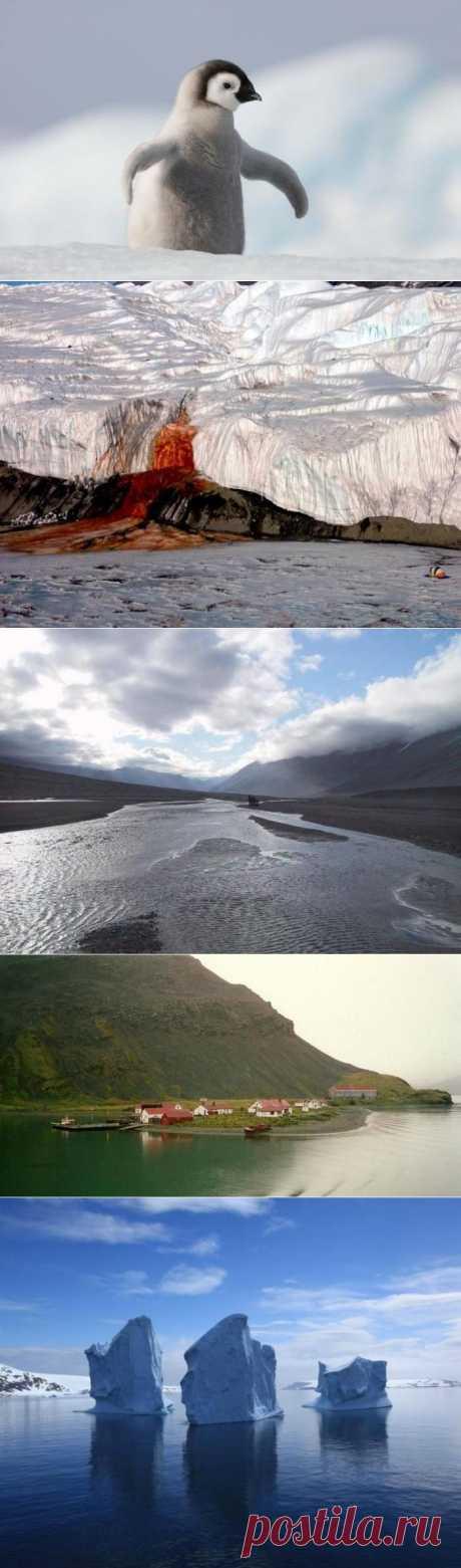 Удивительная Антарктида / Туристический спутник