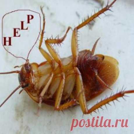 Что, где, когда? Вы заметили, что тараканы, которые приносили нам столько хлопот, исчезли из домов? Мы счастливы, но ученые бьют тревогу – может нарушиться так называемая пищевая цепочка и потреблять отходы человеческой деятельности будет некому. Точных причин исчезновения рыжих тараканов назвать пока не может ни кто. Есть предположение, что на них повлияли компьютеры, сотовые телефоны. Некоторые ученые предполагают, что ...