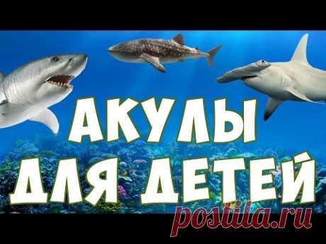 Акулы для детей   морские животные   учим рыб   развивающее видео - YouTube