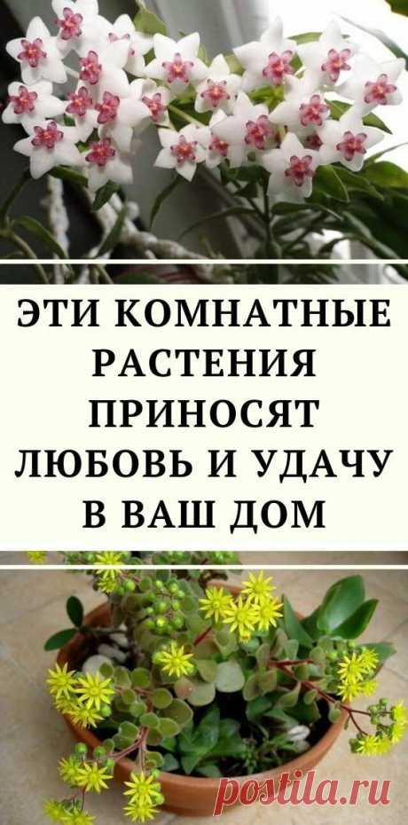 Эти комнатные растения приносят любовь и удачу в ваш дом