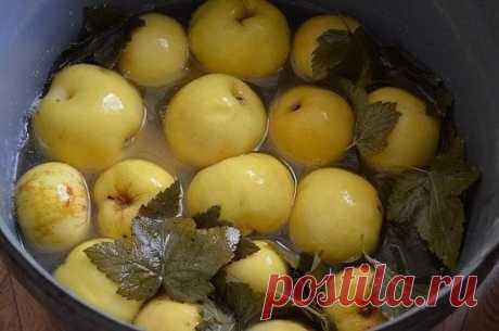 Яблоки мочёные. Простой и вкусный рецепт. Для замачивания возьмем яблоки сорта Антоновка. Серединку не вырезаем. В кастрюлю на дно кладем листья смородины, затем яблоки укладываем хвостиками вверх. Каждый слой перекладываем смородиновыми листьями. Можно вместо смородины переложить мелко нарезанной овсяной соломой. Заливаем яблоки холодным сиропом и кладем сверху гнет. На каждые 10 л воды — 400 г сахара и 3 ст. ложки соли. Кипятим и охлаждаем. Можно вместо сахара положить 6...