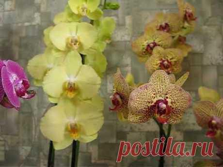 Основные правила ухода за орхидеей-от А до Я.