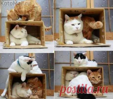 Коробка на все случаи жизни)))