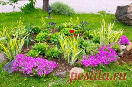 Как красиво оформить клумбу непрерывного цветения своими руками   Цветники и клумбы (Огород.ru)