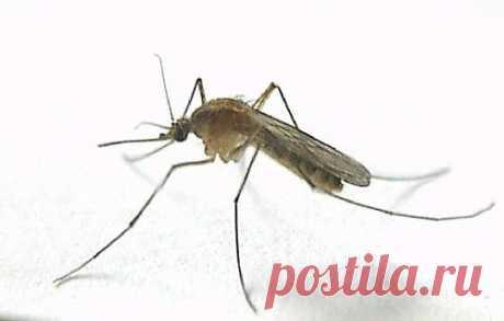 8 убийственных ароматов от комаров | My Milady