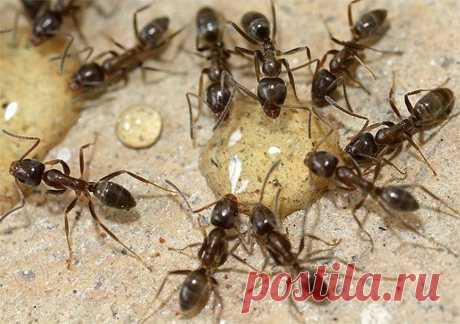 НАДЕЖНОЕ СРЕДСТВО ОТ МУРАВЬЕВ Чтобы избавиться от муравьев в саду, используйте проверенное средство. Рецепт прост: