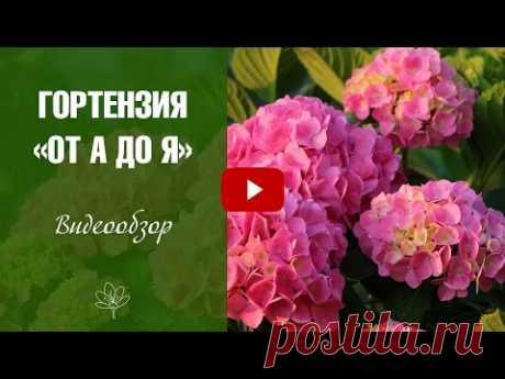Сорта Гортензии все о растении 🌟 Цветы в саду - Пошаговое руководство по посадке и уходу.