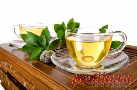 Advantage of green tea for an organism. All properties and possible harm