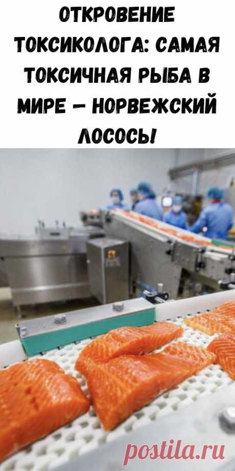 Откровение токсиколога: самая токсичная рыба в мире — норвежский лосось! - Полезные советы красоты