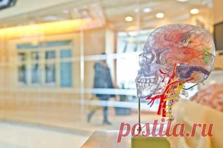 🧠 Три мифа о нашем мозге Миф №1: мы задействуем всего 10% мозга Здравый смысл и знания о естественном отборе подсказывают, что это глупость, иначе после травм мозга люди не теряли бы его функции. Да и сам мозг был бы меньше, поскольку ему нужно 20% питательных веществ организма. У каждого отдела есть своя функция. Во время выполнения конкретных задач отмечается повышенная неврологическая активность в отдельных участках. Но в целом мозг работает всегда, даже во время сна. Слова про 10% — это…