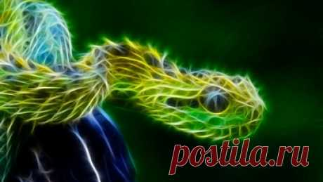 Reptiles wallpaper - 1192448 в Яндекс.Коллекциях