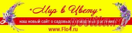 """Капуста """"Провансаль"""" - Простые рецепты - женский сайт"""