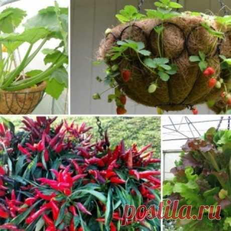 15 идеальных растений для выращивания в подвесных кашпо - МирТесен