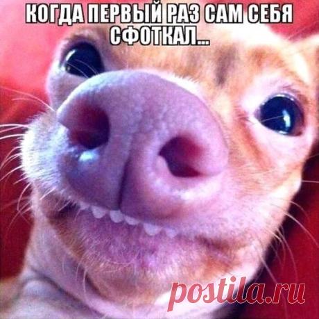 Юмор>Улыбнитесь!
