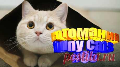 Любите смотреть смешные видео про котов? Тогда мы уверены, Вам понравится наше видео 😍. Также на котомании Вас ждут: видео кот,видео кота,видео коте,видео котов,видео кошек,видео кошка,видео кошки,видео о котах, видео о смешных кошках, видео приколы, видео про кота, видео с котиками, видео с кошками, видео смешная кошка, видео смешное о кошках, видео смешные котиков, видео эти смешные кошки, говорящие коты, для котов, для кошек, и кошки, кот видео, кот смешное видео, котик