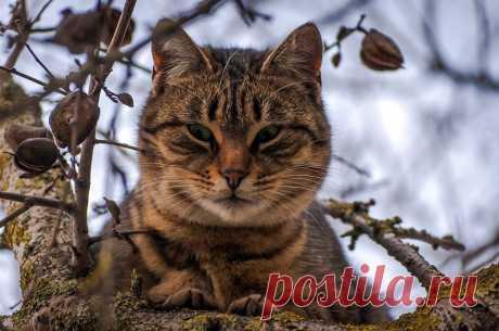 Фото кот на дереве - фотограф Евгений Радошевич - природа - ФотоФорум.ру