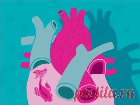 Как сохранить здоровье сердца Сердце — трудолюбивый орган, который работает безостановочно всю нашу жизнь. Это центр сердечно-сосудистой системы. Сердце качает кровь, транспортируя артериями кислород и необходимые вещества к органам и тканям.