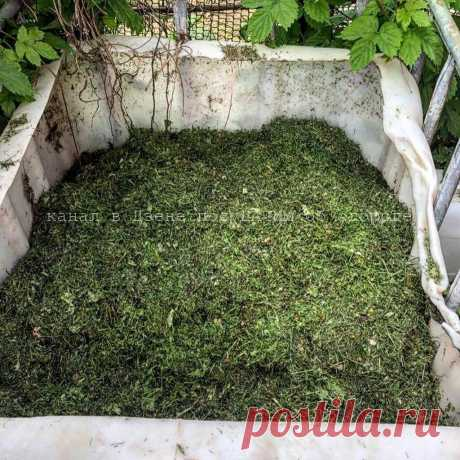 Получаю готовый компост за месяц. Если бы не американский напиток, ждала бы до следующей весны   посуДАЧИм об огороде   Яндекс Дзен