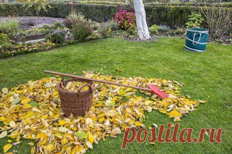 Растительные остатки: опасность для сада и огорода